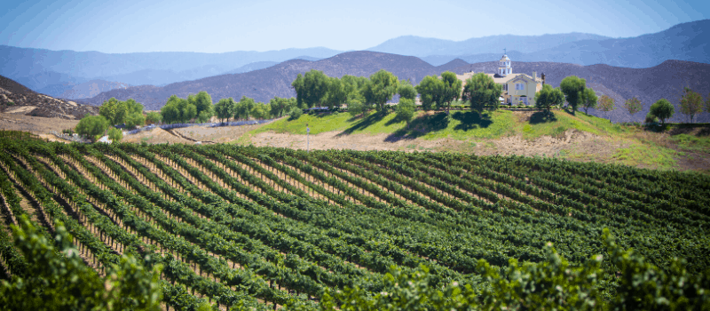 De geschiedenis van wijn in Italië