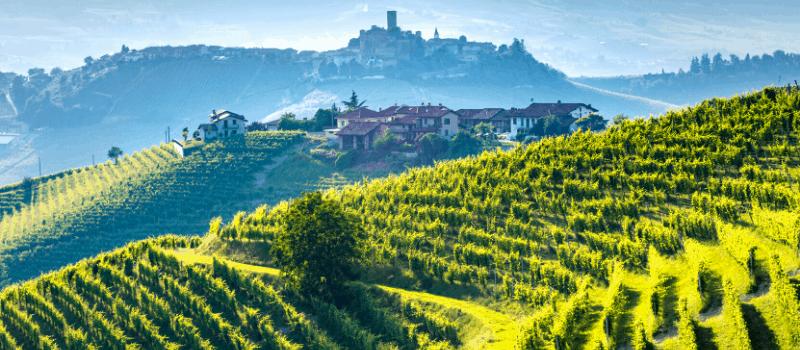 De huidige Italiaanse wijnbouw
